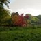E1 Autumn