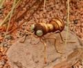Metal Ant DSCF0141