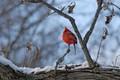 Cardinal Rule