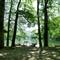 2012-0863 Biogradska Gora National Park Montenegro