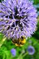Beeneath a treasure-chest of pollen