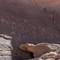 134_IMGP7805_Wadi-Rum