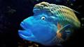 brainy fish