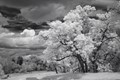 Infrared beneath gathering storm clouds