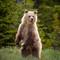 GrizzlyCub_BowLake_June2013-1