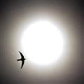 Bird, sun, poplar fluff...