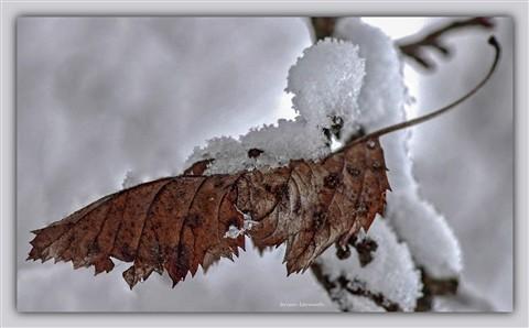 Snow on a brown leaf