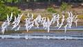 Tern Squadron