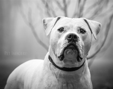 P1136356_bulldog-kaplan