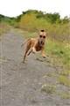 Chica running happy