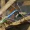 dragonflies arboretum -cr copy