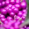 berries_100