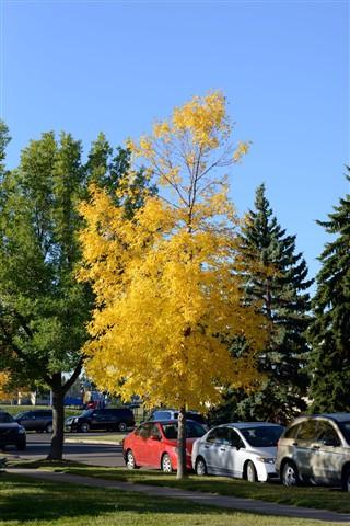 Fall 2012 Edmonton
