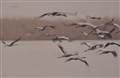 Carnes migration 2