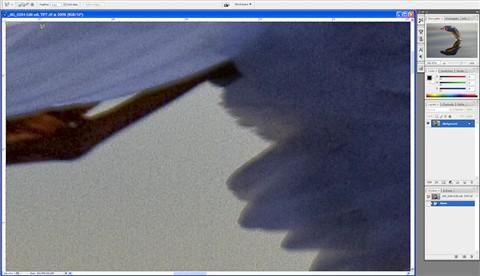 gull sharp Nik TIFF 300pc detail 1