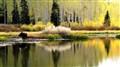 Moose at Willow Lake