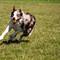 runningdog-119