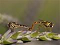 wild invertebrates