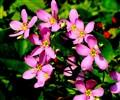 Wildflowers, DSC01637