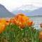 Vileneuve Montreux 191