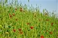 Efes Çiçekler
