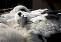Stork's nest