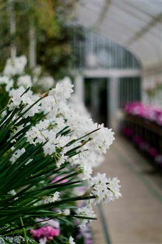 Botanic walkabout 22-01-2010-4