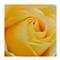 Rose29th5a