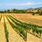 Toscane (360)vineyard Italy
