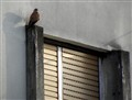 Kestrel on the 10th floor