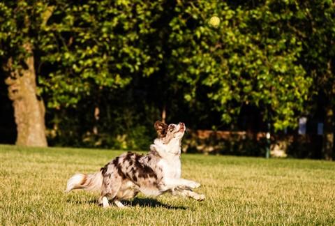 running dog-043