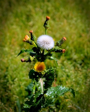 weed photomax hdr 2 copy