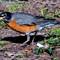Robin at the lake3