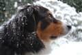 Bindy loves snow