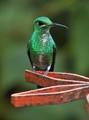 Monteverde Green