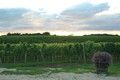Long Island Vineyard