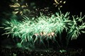 Fireworks - Green