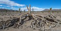 following a washboard dirt road to nowhere in Death Valley, we came upon a wide open valley, devoid of civilization.  when this tree fell, no one heard it, but on the day we visited, it spoke to my camera.
