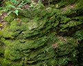 Moss Ferns Rock