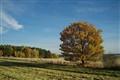 autumn5