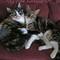 CATS WEB