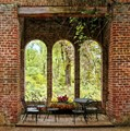 Windows To The Forest