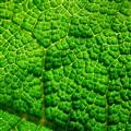 Planet Herbivoria . . .