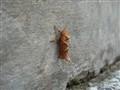 Strange bug
