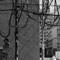 Cables, Tokyo: L1002783