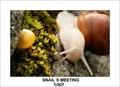 snail´s meeting