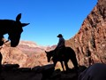 Mule riders on Bright Angel trail in the Grand Canyon AZ.