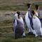 DPR Penguin v. Goose
