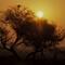 Sunrise: OLYMPUS DIGITAL CAMERA