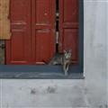 Feral cat. Lugo, Spain